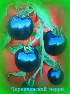 Семена томатов фото 2