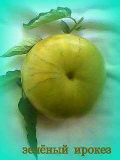 Семена томатов фото 3