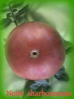 Семена томатов фото 6