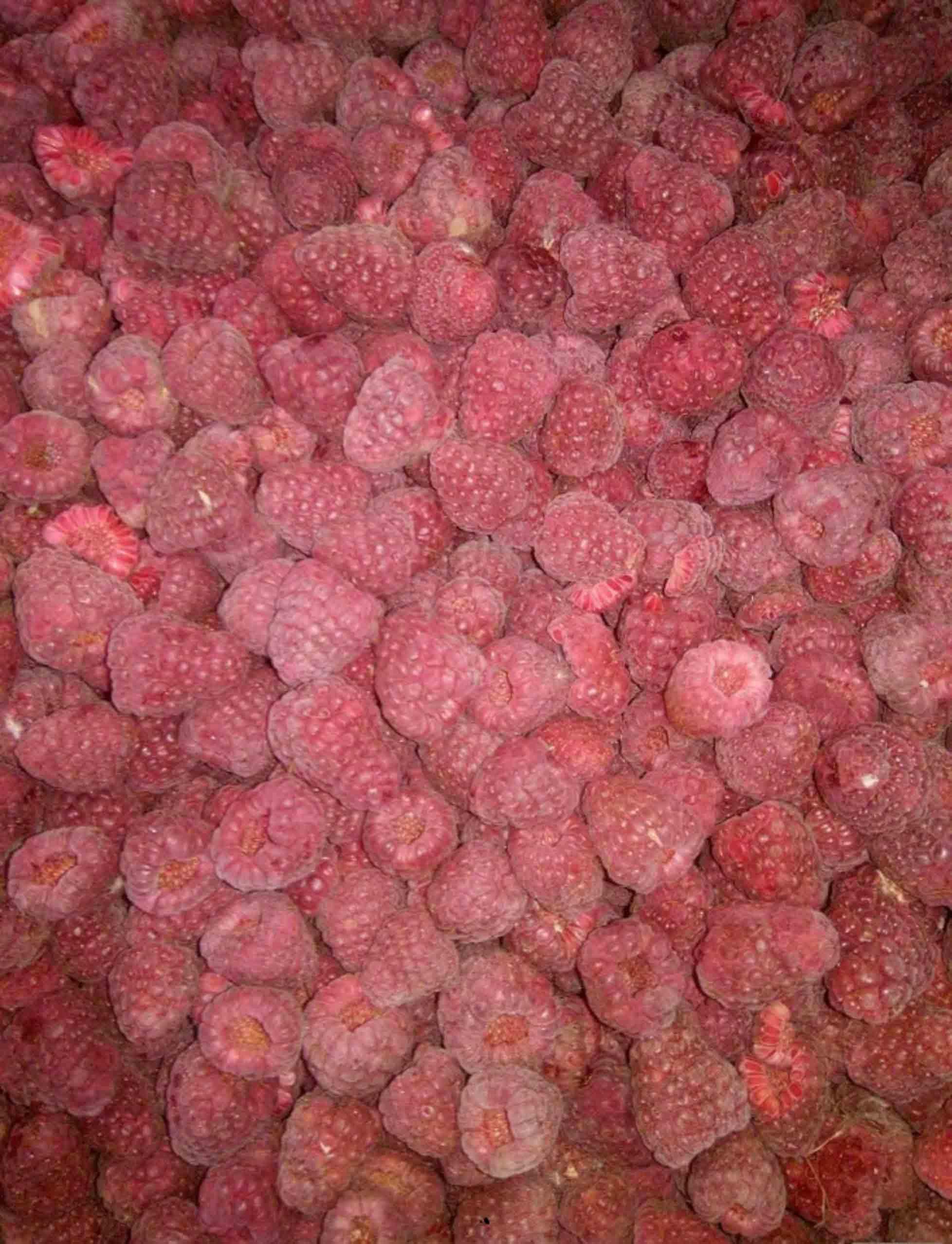 Продам оптом замороженную малина, сухую органическая малину  фото 1
