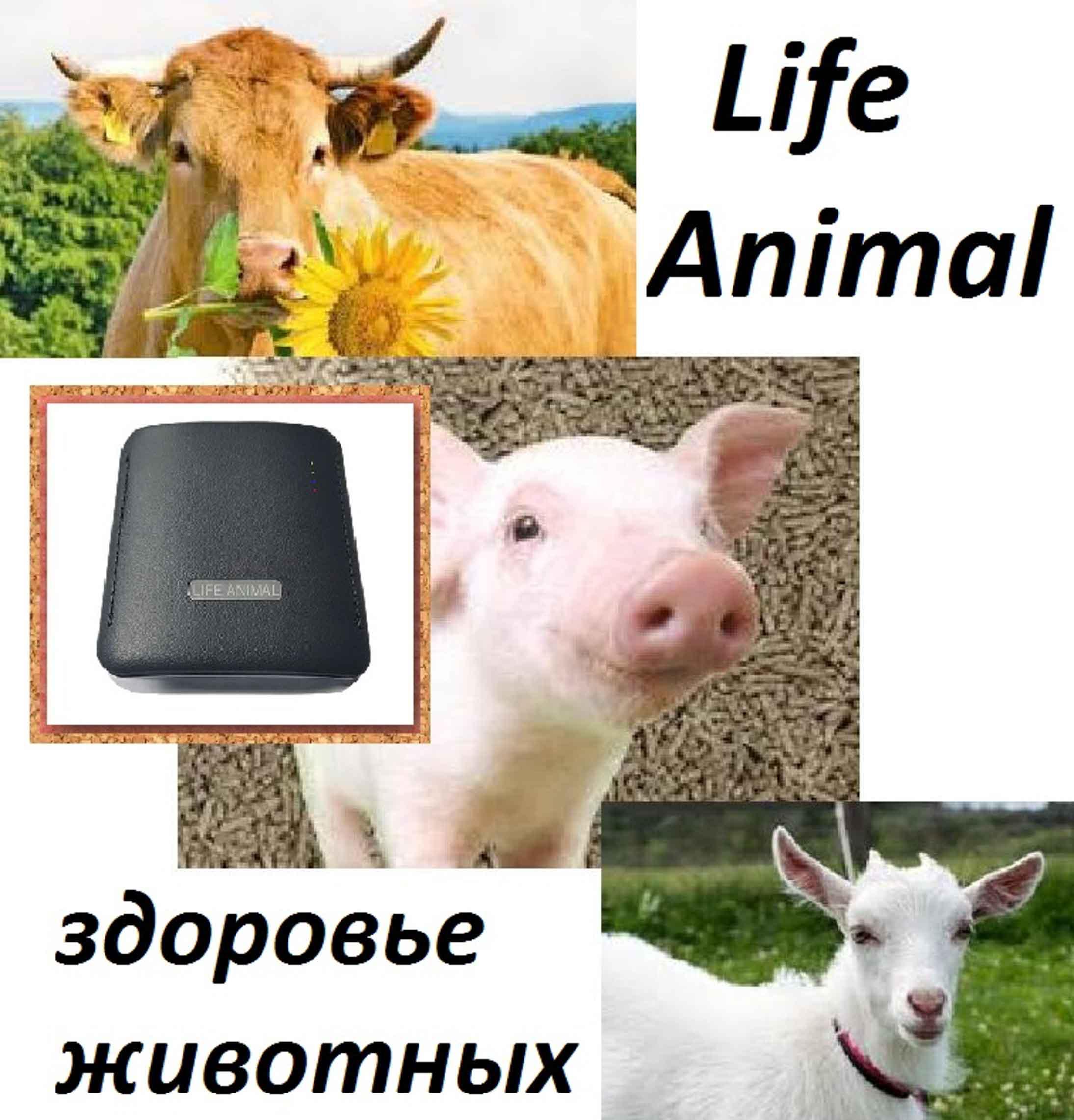 Лечение животных дома прибором Life Animal.  фото 2
