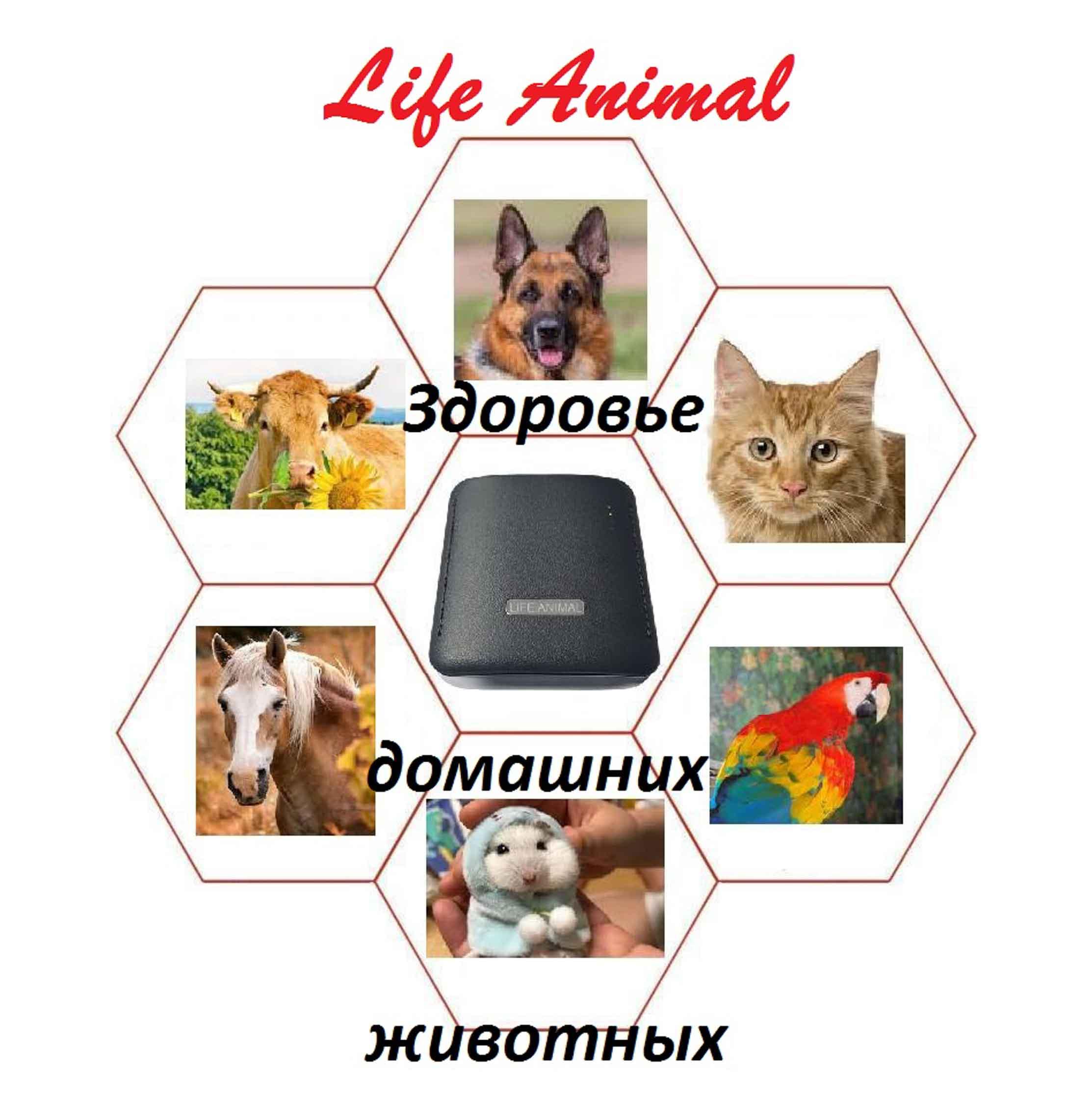 Лечение животных дома прибором Life Animal.  фото 3