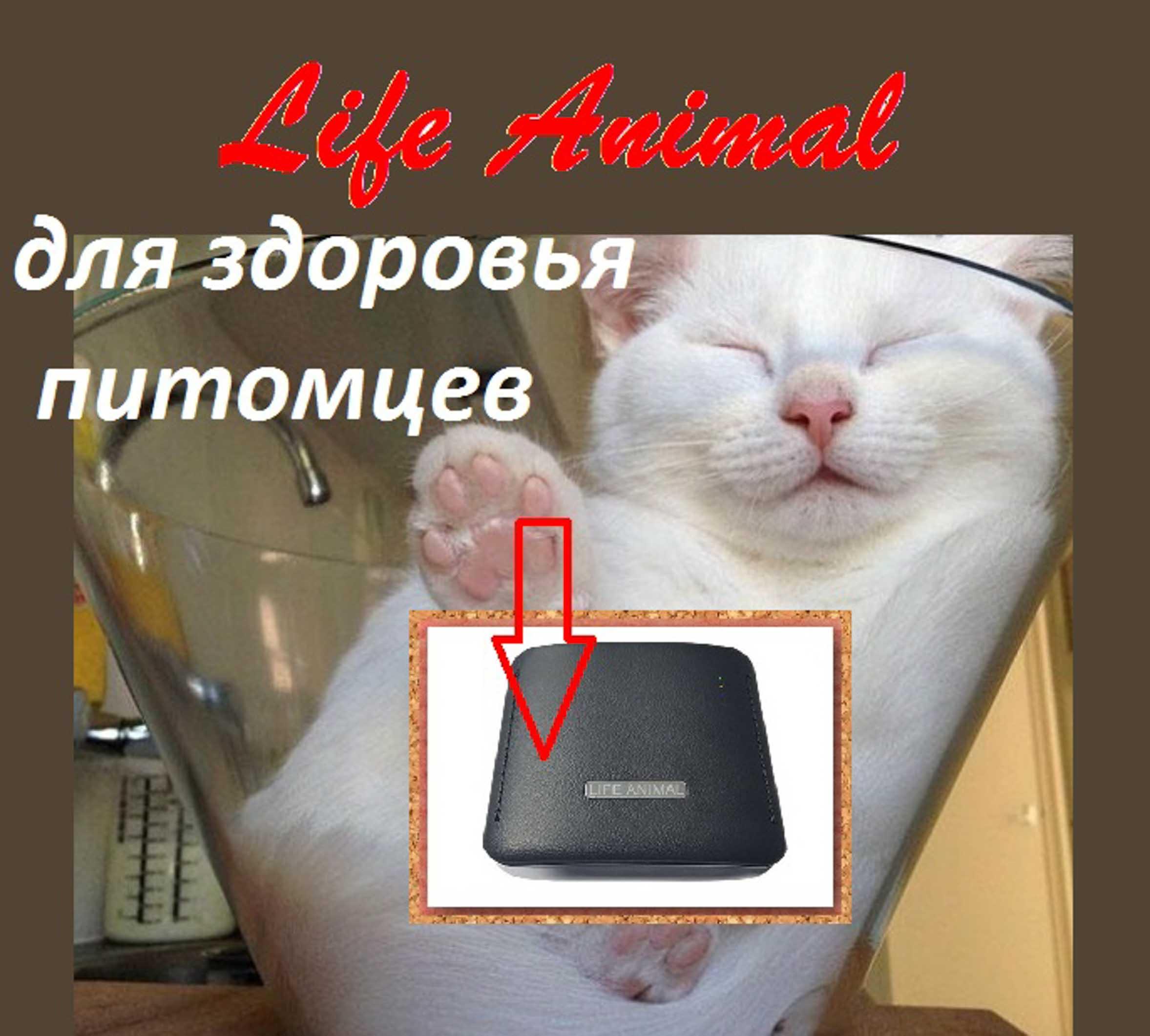 Лечение животных дома прибором Life Animal.  фото 4