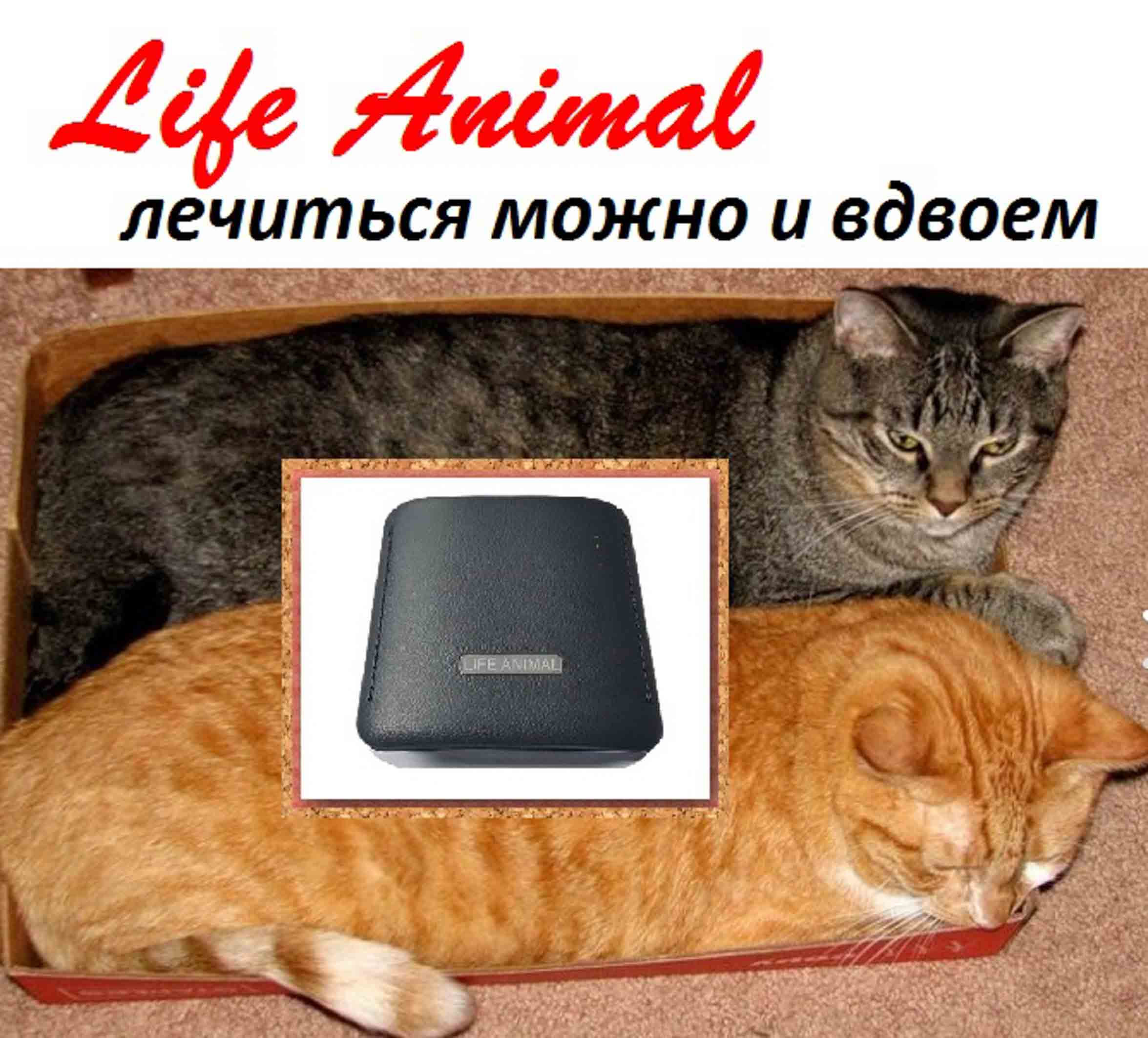 Лечение животных дома прибором Life Animal.  фото 5