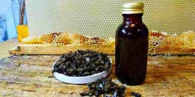 Настойка подмора пчелиного